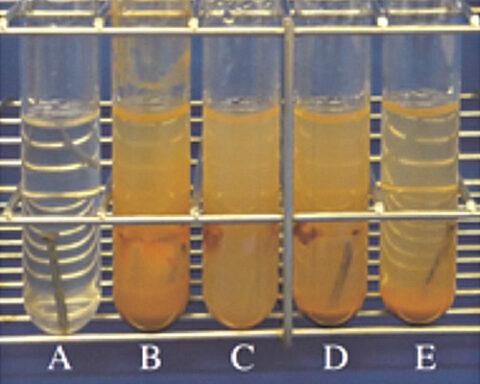 抗酸化力 天然水