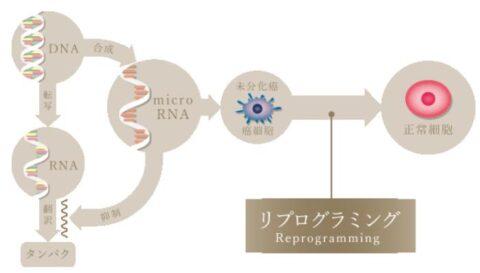 細胞リプログラミング技術